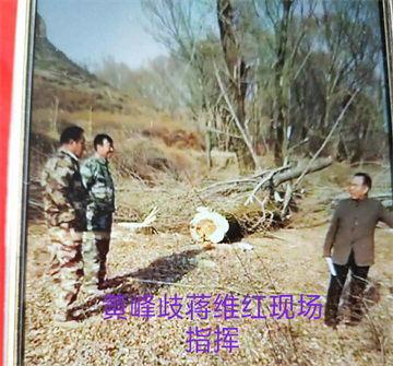 胆大妄为将二百亩树林毁灭性夷为平地